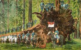 INDUSTRIE DE BOIS(ETATS UNIS) CALIFORNIA - Trees