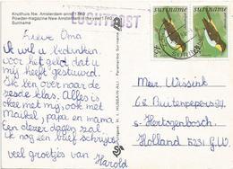 Suriname 1984 Zorg En Hoop Geelrugtanager Bird Viewcard - Zangvogels