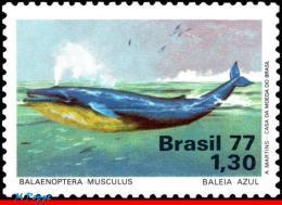 Ref. BR-1510 BRAZIL 1977 SEA MAMMALS, BLUE WHALE, PROTECTION OF, MARINE LIFE, MI# 1597, MNH 1V Sc# 1510 - Baleines