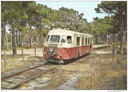 CPSM - Calvi (Corse) - Autorail CFC 03 Dans La Pinède - FRANCO DE PORT - Calvi