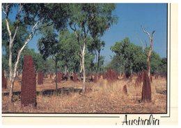 (744) Australia - Giant Termit Mount (card Shorten At Top) - Outback