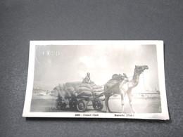 PAKISTAN - Carte Postale Photo - Karachi - Camel Cark - Voyagé En 1954 - L 16921 - Pakistan