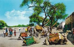 Postcard Aden / Yemen Camels Resting At Sheikh Othman Market  My Ref  B12169 - Yemen