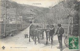 L'Auvergne - Attelage De Boeufs Auvergnat - Carte C.C.C. & C. N° 80 - Spannen