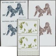 Rwanda 1970 COB 370. 3 Essais De Couleurs. Gorilles Des Montagnes. Jeunes Primates - Gorilles