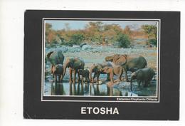 NAMIBIA, ELEFANTEN  1990 - Namibia