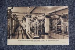 LYON - Museum Des Sciences Naturelles : Galerie D'Anatomie Comparée - Lyon