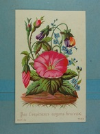 Mignonette Par L'espérance Soyons Heureux (la Fleur Du Centre S'ouvre) - Fleurs
