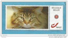 MYSTAMP BELGIUM     STAMP.  ** MNH  CAT .. CHAT .. KAT ...B2.67 - Bélgica