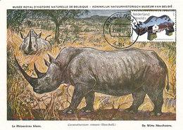 D33809 CARTE MAXIMUM CARD FD 2011 NETHERLANDS - WHITE RHINO CP MUSEUM ORIGINAL - Rhinozerosse