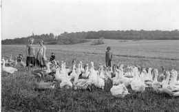 SOMMEVOIRE CARTE PHOTO 1935 OIES AUX CHAMP TBE - Autres Communes