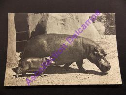 Comité National De L Enfance Hippopotame Et Son Petit - Flusspferde