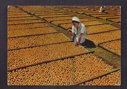CPSM AFRIQUE - BECHUANALAND - BOTSWANA - Fruits Séchant Au Soleil + Publicité PLASMARINE + TB TIMBRE - Botswana