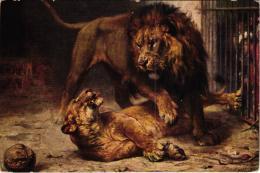 JOLIE CARTE ILLUSTREE LE LION ET SA LIONNE REF 56090 - Lions
