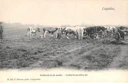 CPA -  Belgique, CAPPELLEN  /  KAPELLEN,  Melkerij In De Weide - Laiterie En Plein Air - Kapellen
