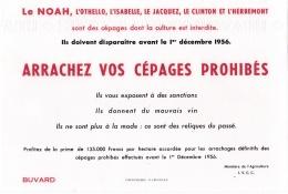 """Buvard  """" Arrachez Vos Cépages Prohibés """"  Noah ,   Othello ,   Le Jacquez ,   Le Clinton Et L'Herbemont - Blotters"""