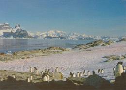 Ile Petermann - La Côte à La Belle Saison, Les Manchots Prennent Le Soleil - Photo Serge Kahn - Circulé 2000 - TAAF : Terres Australes Antarctiques Françaises