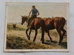 BILD NR.53- SPORT U.SORTE - CIGARETTES CARD-GERMANY,DRESDEN-HORSE - Tabac (objets Liés)