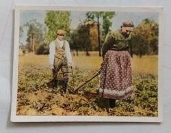 WORKERS-BILD NR.246- SPORT U.SORTE - CIGARETTES CARD-GERMANY,DRESDEN - Tabac (objets Liés)