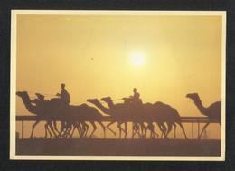 United Arab Emirates Picture Postcard U A E View Card - United Arab Emirates