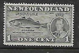 Newfoudland, Canada, 1937, 1c, Codfish, Perf 14, MH * - Newfoundland