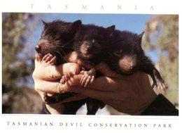 (DEL 561) Australia - TAS - Devils - Non Classés