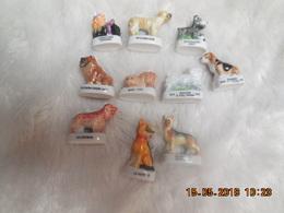 FEVES CHIENS - Animals