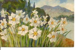 Belle Illustrée Signée HALLER : Narcisses De Montagne - Fleurs