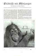 Erlebnisse Mit Affenjungen  /Artikel, Entnommen Aus Zeitschrift /1935 - Bücher, Zeitschriften, Comics