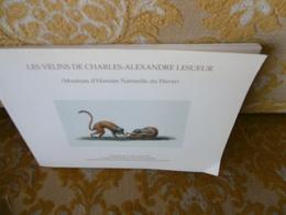 MUSEUM D'HISTOIRE NATURELLE Du HAVRE : Les VELINS De Charles-Alexandre LESUEUR , 1996 - Normandie