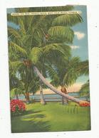 Cp , Etats Unis , Florida , Where The Real Tropics Begin : West PALM BEACH , Voyagée 1939 - Palm Beach