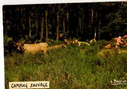 Photo Et Legende Louis BUFFIER Camping Sauvage, Vaches - Illustrateurs & Photographes