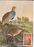 BIRDS, GREY PARTRIDGE, CM, MAXICARD, CARTES MAXIMUM, 1988, ROMANIA - Perdiz Pardilla & Colín