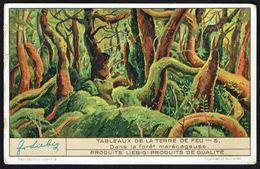 LIEBIG - FR -  1 Chromo N° 5 - Série/Reeks S 1324 - Tableaux De La Terre De Feu: Dans La Forêt Marécageuse. - Liebig