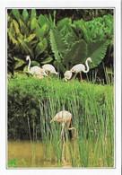 Singapour Jardin Botanique Avec Flamant Rose (2 Scans) - Animaux & Faune