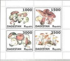 CINDERELLA DAGESTAN - Pilze