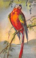 Illustration - Oiseau Perroquet - Vögel