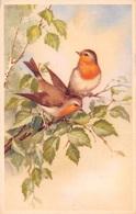 Illustration - Oiseaux Rouge Gorge - Birds