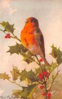 Illustration - Rouge Gorge Houx - Birds