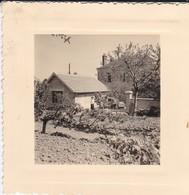 MINI PHOTO---03---BEZENET---1957--arbres Fruitiers Du Clos--garage--( Voiture 4 CV )--voir 2 Scans - Photographie