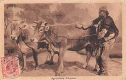 Agricoltore Albanese - Albanie - Scènes Champêtres - Paysan Campagne Agriculteur - Elevage