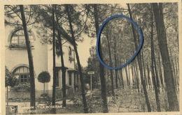 Rijmenam  :  ' LA ROSERAIE '  Sous-bois - Bonheiden