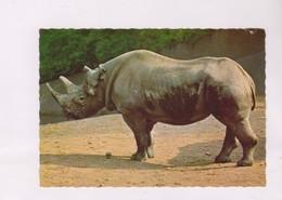 CPM RHINOCEROS - Rhinocéros