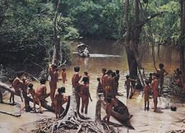 Carte 1970 VENEZUELA / TRIBU GUAICA EN UN CANO DEL ALTO ORINOCO - Venezuela