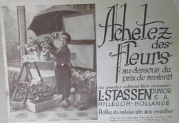 Catalogue 1931 L Stassen  Hillegom Hollande - Jardinage