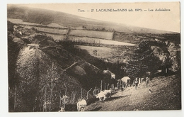 81 Lacaune Les Bains, Les Ardoisières (407) L300 - France