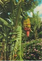 (1950) ISLAS CANARIAS. FLORES Y PLATANERAS ... UNUSED - Unclassified