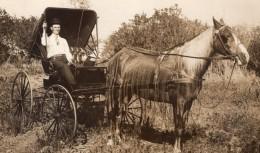 USA Nebraska? August Hartkopf Et Son Cheval Ancienne Carte Photo 1910 - Other