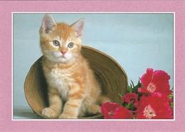 Petit Chat (2 Scans) - Cats