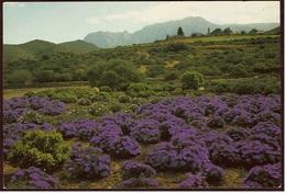 South-Africa  Flora  -  Ansichtskarte Ca.1989    (8595) - Südafrika
